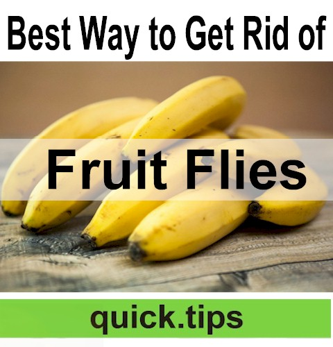 How to Kill Fruit Flies?  It's not as difficult as you might think.